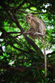 Monkeymonkey — Stock Photo