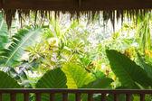 Vista tropical — Foto de Stock