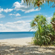 Tropic view — Stock Photo #5879632