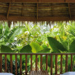 Stock Photo: Tropic view