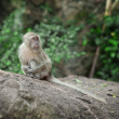 Monkeymonkey - Stockfoto