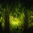 Junglejunglejungle - Stockfoto