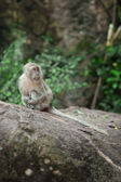 View of nice wild monkey natural tropical environment — Стоковое фото