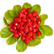 Strawberries with leaves — Stock Photo #5642973