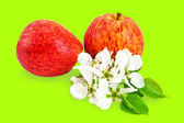 Red apples with flowers — Stock Photo