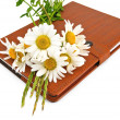Notebook with pen and daisies — Stock Photo