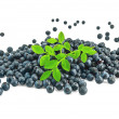 Pile blueberries with a sprig of — Stock Photo #6145672