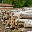 Timber pile - Stock Photo