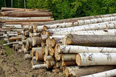 Timber pile — Stock Photo