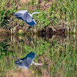Heron over water — Stock Photo