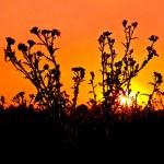 Sunset orange — Stock Photo #6640756