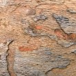Foto Stock: Wood texture closeup, abstract oak tree background.