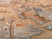 Wood texture closeup, abstract oak tree background. — Stock Photo