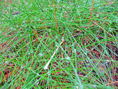 Abstract green grass with rain drops heap, forest details. — Stock Photo