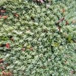 Green moss texture closeup, nature details. — Stock Photo