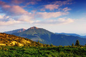 Summer landscape in mountains a sunny day — Stock Photo