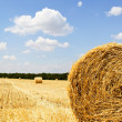 Straw bales in a field with blue sky - Stock Photo