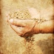 Wheat and hands of the old farmer — Stock Photo #6584653
