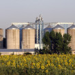 Stock Photo: View of grain silos