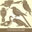Royalty-Free Stock Vector Image: Birds - variety of vintage bird illustrations