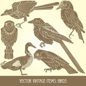 Birds - variety of vintage bird illustrations — Stock Vector