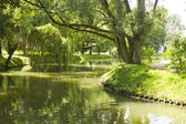River in park during summer — Stock Photo