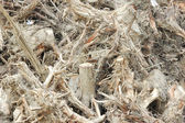 Tree Roots — Stock Photo