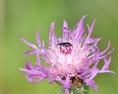 Beetle — Stock fotografie