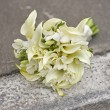 Bridal bouquet of white flowers — Stock Photo