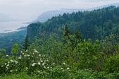 Columbia Gorge — Stockfoto