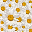 Chamomile background — Stock Photo #6032147