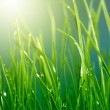 Stock Photo: Soft green grass background