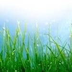 Soft green grass background — Stock Photo