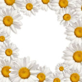 Chamomile frame — Stock Photo