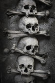 Skull and bones — Stock Photo
