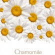 Chamomile background — Stock Photo #6132986