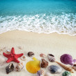 Sea shells on sand beach — Stock fotografie