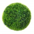 Stock Photo: Grass sphere