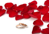 Wedding rings and rose petals — Stock Photo