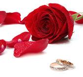 Alianças de casamento e rose — Foto Stock
