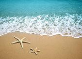 Estrella de mar en la arena de una playa — Foto de Stock