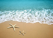 Starfish on a beach sand — Stock Photo