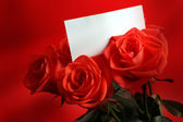 Red rose with card — Stock Photo