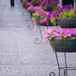 Main street in old town with cobblestone and flowers — Stock Photo
