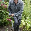 Foto Stock: Man gardening and smiling at camera