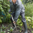 Elderly man digging vegetable patch with fork — Stock Photo #6046795