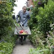 Elderly man pushing a wheelbarrow up his garden path — Stock Photo