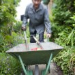 Focus on a wheelbarrow in the garden — Stock Photo