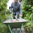 图库照片: Focus on a wheelbarrow in the garden