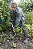 Elderly man digging vegetable patch with fork — Stock Photo
